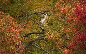 Fotos Reiher Vögel Ast