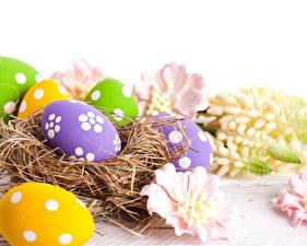 Desktop hintergrundbilder Feiertage Ostern Eier Nest