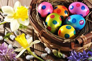 Bilder Feiertage Ostern Narzissen Ei Nest