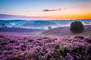 Hintergrundbilder Landschaftsfotografie Lavendel Sonnenaufgänge und Sonnenuntergänge Grünland Morgen Felder Nebel Hügel Natur
