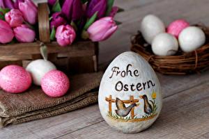 Bilder Ostern Feiertage Tulpen Ei Design Nest