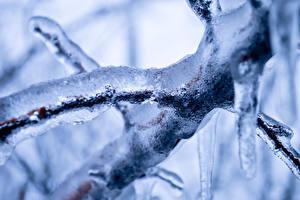Bilder Großansicht Eis Ast Natur