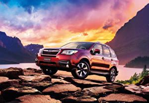 Bilder Subaru Rot Forester