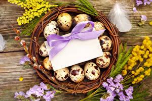 Bilder Feiertage Ostern Silber-Akazie Federn Eier Nest Vorlage Grußkarte