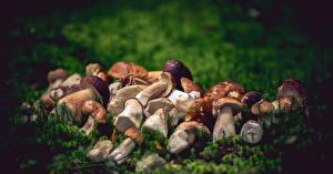 Fotos Pilze Natur das Essen