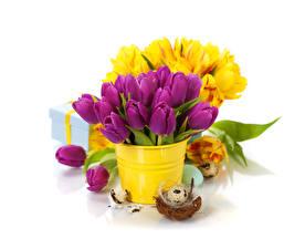 Hintergrundbilder Ostern Tulpen Eier Nest Blumen