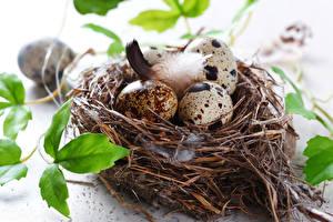 Hintergrundbilder Feiertage Ostern Ei Nest