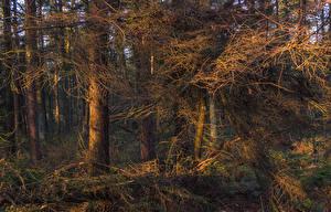 Fotos Wälder Baumstamm Ast Natur