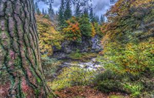 Bilder Schottland Flusse Rinde HDR Baumstamm Bäume Clyde Valley Woodlands Natur