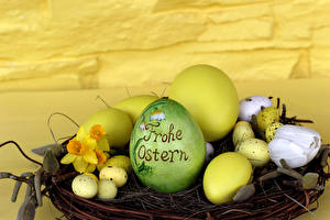 Bilder Feiertage Ostern Narzissen Tulpen Eier Nest