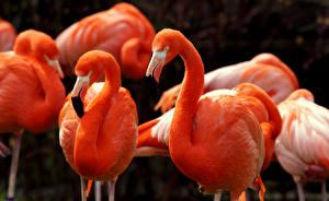 Fotos Flamingos Vögel Rosa Farbe Tiere