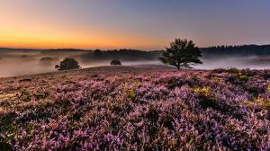 Bilder Acker Lavendel Nebel Bäume Natur