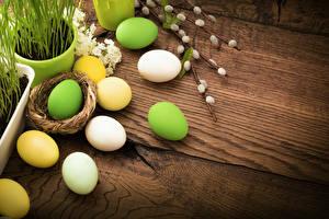 Fotos Ostern Ei Nest