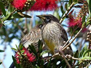 Hintergrundbilder Vögel Zwei Ast ein Tier