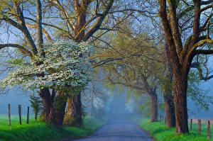 Pictures Roads Trees Fog Nature