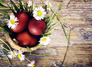 Fotos Feiertage Ostern Kamillen Ei Nest