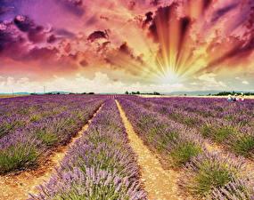 Bilder Landschaftsfotografie Felder Lavendel Himmel Morgendämmerung und Sonnenuntergang Wolke Lichtstrahl Natur