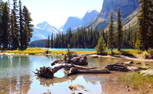 Bilder Kanada Park See Landschaftsfotografie Fichten Jasper park Maligne