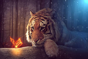 Image Tigers Butterflies Staring Fantasy Animals