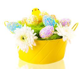 Hintergrundbilder Feiertage Ostern Georginen Hühner Eier Design