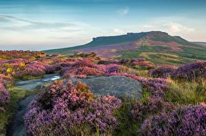 Bilder Vereinigtes Königreich Park Lavendel Grünland Peak District National Park Natur