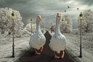 Pictures Geese Street lights Two Animals