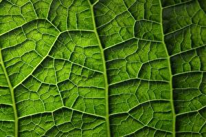 Fotos Textur Großansicht Makrofotografie Blatt Grün Natur