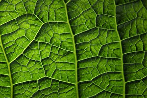 Wallpaper Texture Closeup Macro photography Leaf Green Nature