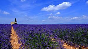 Hintergrundbilder Landschaftsfotografie Felder Lavendel Himmel Natur