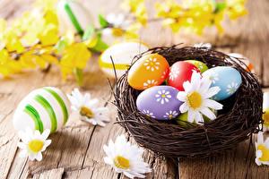 Bilder Feiertage Ostern Kamillen Ei Nest