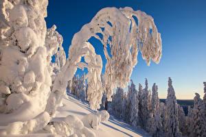 Bilder Winter Ast Schnee Natur