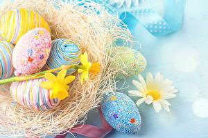 Fotos Feiertage Ostern Kamillen Eier Nest Design