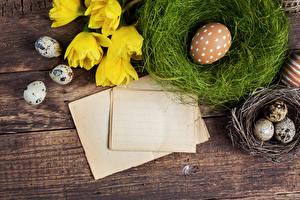 Hintergrundbilder Feiertage Ostern Tulpen Eier Nest Vorlage Grußkarte
