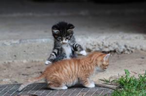 Wallpaper Cat Kittens Two Animals