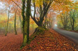 Pictures Roads Autumn Trees Fog Nature