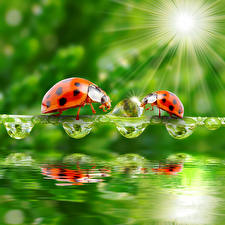 Photo Ladybird Water Drops 2 Rays of light animal
