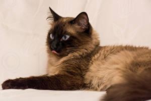 Pictures Cat 1ZOOM Animals