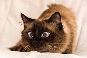 Wallpapers Cat 1ZOOM Glance Funny animal