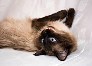 Wallpaper Cats 1ZOOM animal