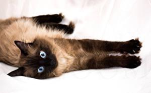 Image Cats 1ZOOM animal