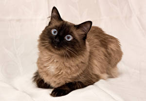 Picture Cat 1ZOOM Glance animal