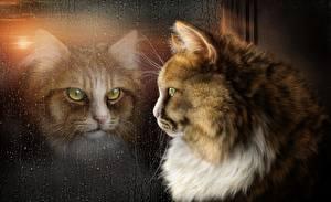 Fotos Katzen Glas Fenster ein Tier Fantasy