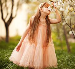 Hintergrundbilder Frühling Kleine Mädchen Kleid Ast Braune Haare Kinder