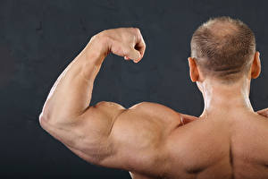 Wallpapers Men Bodybuilding Human back Muscle muscles