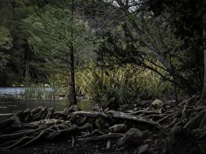 Photo USA Forests Lake Texas Austin Nature