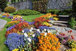 Bilder Schweiz Parks Tulpen Zinnien Garten-Stiefmütterchen Lausanne Blumen
