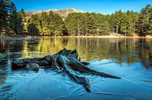 Pictures France Lake Forests Tree stump Trees Corsica Nature