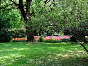 Bilder Slowenien Park Ast Gras Bäume Mozirski gaj Natur
