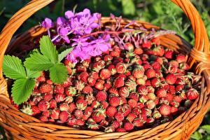 Fotos Hügel-Erdbeere Viel Weidenkorb