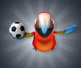 Fonds d'écran Oiseau Perroquets Football Bec Ballon 3D Graphiques Animaux